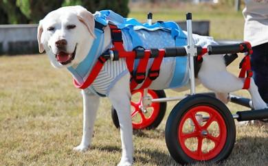 [№5644-0392]大型犬用二輪車椅子(背丈50~75cm 体重40キロ以下)