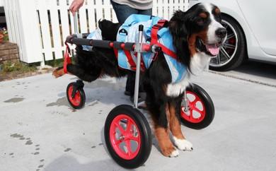 [№5644-0396]大型犬用三輪車椅子(背丈50~75cm 体重40キロ以下)