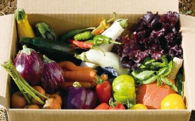 [№5746-0104]オーガニック 野菜BOX 10種類詰め合わせ
