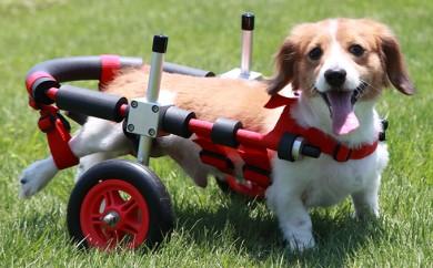 [№5644-0390]ダックスフンド用二輪車椅子(体重15キロ以下)