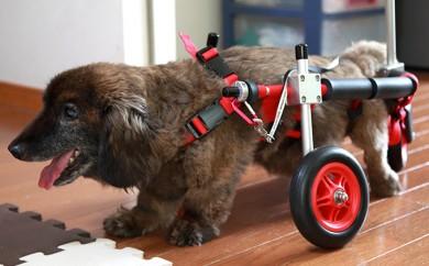 [№5644-0394]ダックスフンド用三輪車椅子(体重15キロ以下)