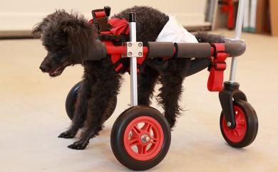 [№5644-0393]小型犬用三輪車椅子(背丈23~35cm 体重8キロ以下)