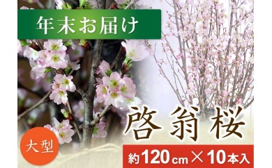 AT02 春を先取り!冬に咲く桜『啓翁桜』(年末お届けLサイズ)