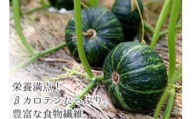 A-366 【個数限定】ホクホク甘い!旬の味平かぼちゃ約10kg