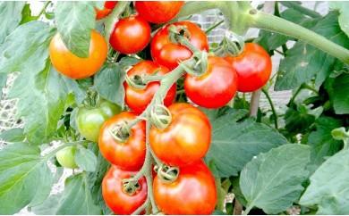 AR03 数量限定 土からこだわりの有機栽培トマト「フルティカ」2kg