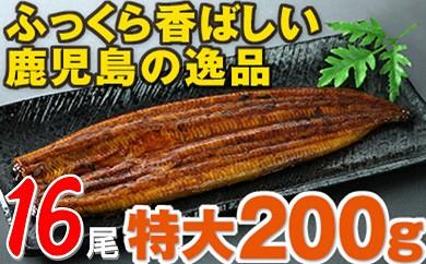 705 鹿児島県産特大うなぎ約200g×16尾!