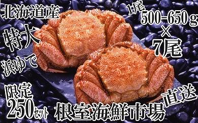 CC-14025 根室海鮮市場<直送>浜ゆで毛ガニ500~650g×7尾[434688]