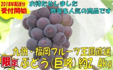 A257.九州・福岡フルーツ王国より直送.ぶどう(巨峰)約2.4kg/2018年8月~9月配送