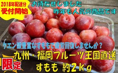 A264.九州・福岡フルーツ王国より直送.すもも.約2kg/2018年6月~7月配送