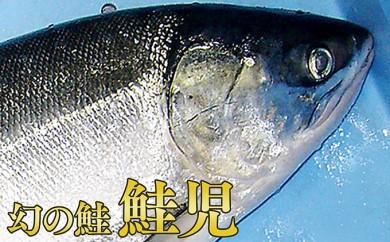 [№5863-0137]幻の鮭【鮭児】3.1kg前後 3D冷凍済