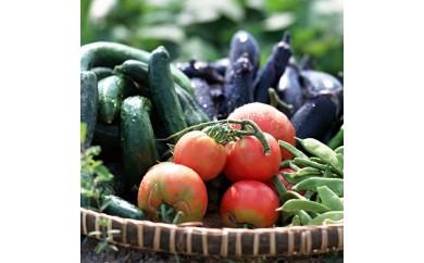 BQ01_まくらがの里古河 道の駅の新鮮野菜と人参ドレッシングの詰合せ