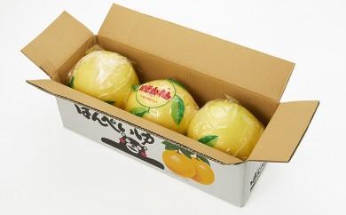[№5682-0173]八代産晩白柚3玉(くまモンの箱入り)