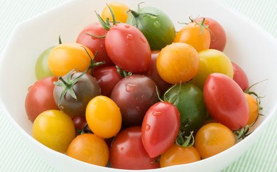 [№5862-0524]【限定】Coiinaトマトミックスセット 1.5kg