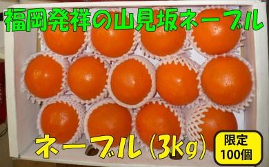 A015.ネーブル(3kg程度)