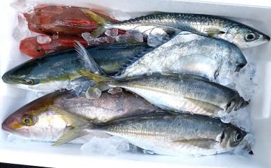 【限定】漁師直送 朝獲れ!高級魚入り!船上神経締め 鮮魚ボックス