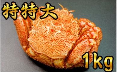 20-77 【数量限定】鮮度抜群!特特大毛ガニ(1kg) 1尾