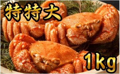 50-23 【数量限定】鮮度抜群!特特大毛ガニ(1kg) 3尾