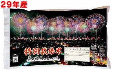 Z8-001 【29年産】新潟県長岡産コシヒカリ(特別栽培米)5kg