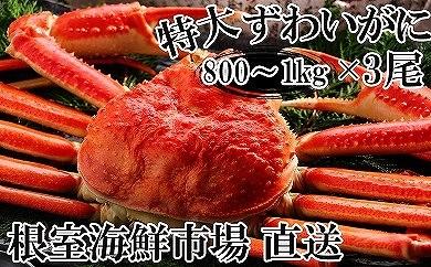 CB-22028 根室海鮮市場<直送>本ずわいがに姿800g~1kg×3尾[436736]