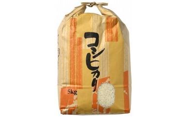 【新米】【輪島のお米】町野町産コシヒカリ5kg(精米)