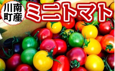 35-04カラフルミニトマト詰合せ