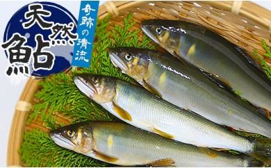 清流日本一 高知県仁淀川の天然鮎(冷凍)1kg
