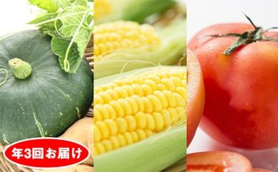 [№5724-0183]旬の野菜 年3回お届け(高糖度トマト・スイートコーン・カボチャなど)