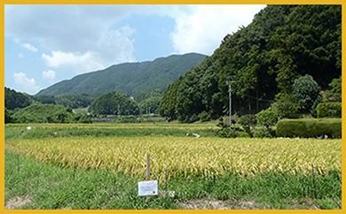 M103 宮若うまい米コンクール金賞米【6キロ】