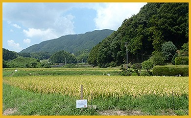 M104 宮若うまい米コンクール金賞米【15キロ】