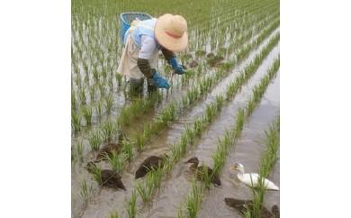 016 つや姫マイスター(源六)が作る 有機栽培米ひとめぼれ5kg
