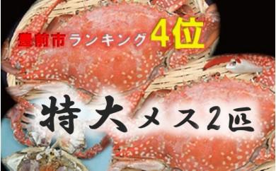 BG10 豊前海産活渡り蟹塩茹で(特大メス2匹)【37500pt】