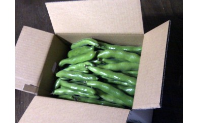 【A75】房州の美味!一寸「そら豆」