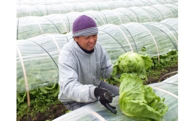 【A76】安西農園の「冬野菜セット」