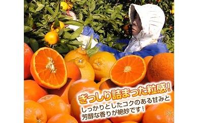 156.特選 旬のかんきつ詰め合わせ 10kg