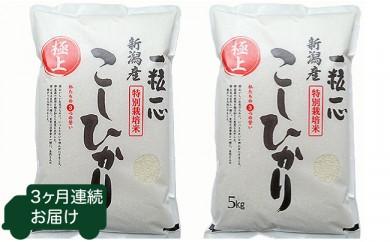 6-008 新潟県長岡産特別栽培米コシヒカリ 毎月10kg 3回お届け