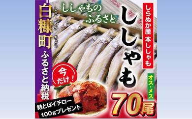 [№5723-0176]ししゃものふるさと しらぬか産ししゃも【70尾】 今なら「鮭とばイチロー100g」プレゼント