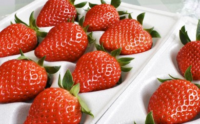 [№5659-0433]南信州産いちご 2種食べ比べセット 300g×4箱 たかずやファーム