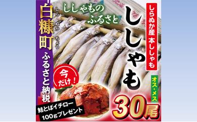 [№5723-0175]ししゃものふるさと しらぬか産ししゃも【オスメス30尾】 今なら「鮭とばイチロー100g」プレゼント