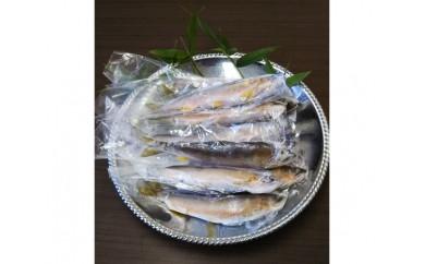 No.101 天然冷凍鮎 約1kg (大野川産)