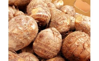 [№5884-0140]奥越前の名水で育った粘り気の強い里芋、蕨生里芋3kg