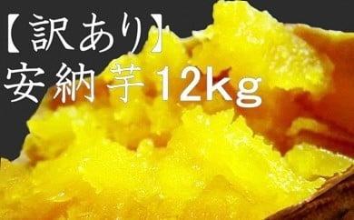 Y12-3 【訳あり】【期間限定・数量限定】熟成安納芋12Kg