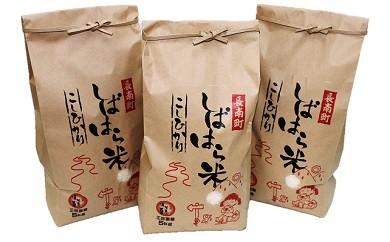千葉県産コシヒカリ「しばはら米」15kg (5kg×3)【令和元年産】