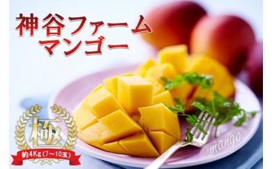 【限定100ケース】神谷ファームのマンゴー(極)4Kg(7~10玉)