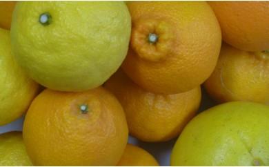 RK-24【訳あり】柑橘詰め合わせセット