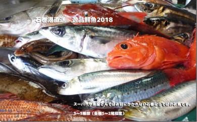 石巻港直送 逸品鮮魚