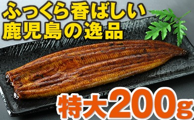 【No.279】鹿児島県産特大うなぎ約200g×2尾!