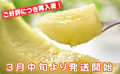 B-174 【春限定】志布志産高級メロン『秘蔵っ娘』白玉2個