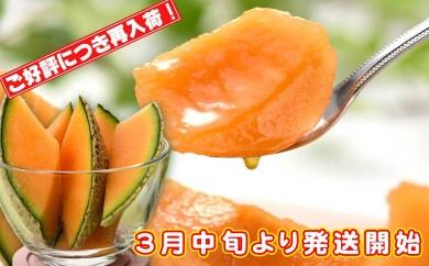 A-237 【春限定】志布志産高級メロン『秘蔵っ娘』紅玉1個
