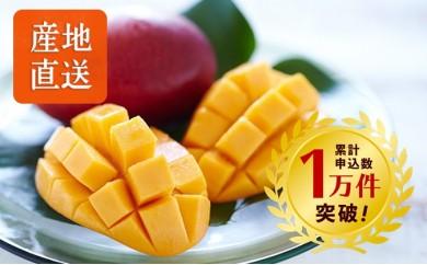 P611【先行予約】西平さんちのべっぴんB級マンゴー(ご家庭用)【25pt】