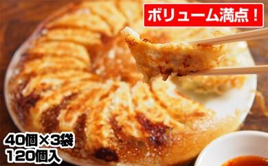 [№5641-0441]北海道産豚肉の餃子 120個